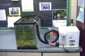 Picture of a Chilled Aquarium in the Classroom