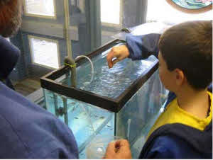 Picture of Students Tending Trout in Classroom Tank